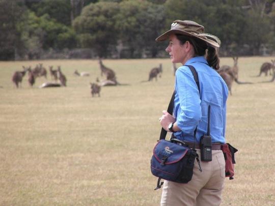 Janine Duffy Echidna Walkabout kangaroos