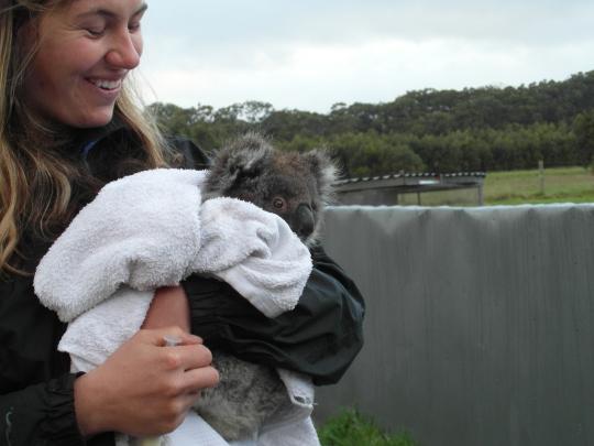 Cuddling a koala in Victoria