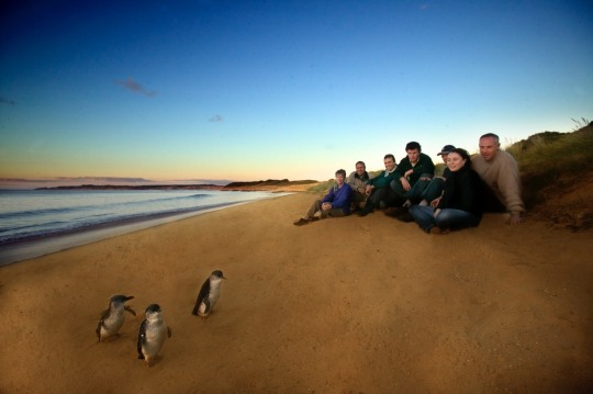 Ultimate Penguin Tour, Phillip Island, Victoria
