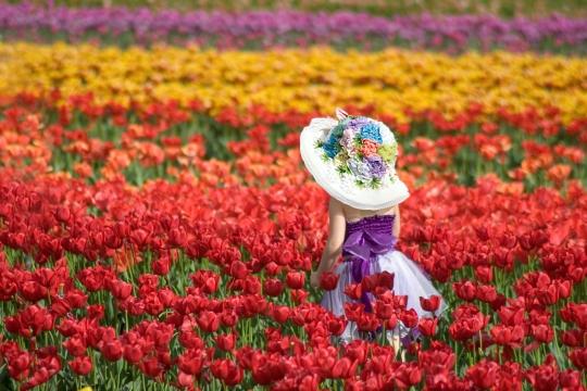 Child at Tesselaar Tulip Festival, Victoria Australia