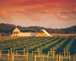 Vineyard in the Yarra Valley